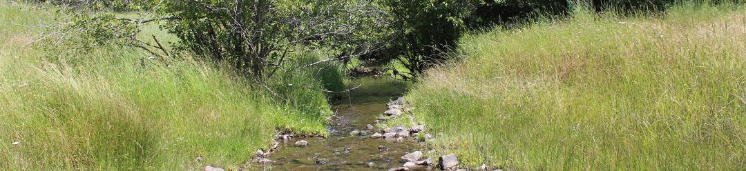 elk-creek-01