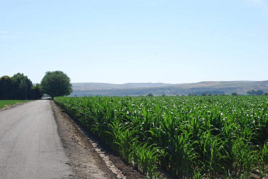 recla-farms-gallery-19
